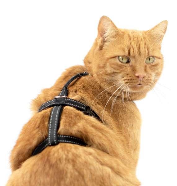 Safety Harness Pro de sécurité pour chat incassable réfléchissant noir